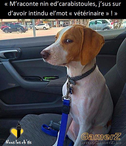 vétérinaire.png
